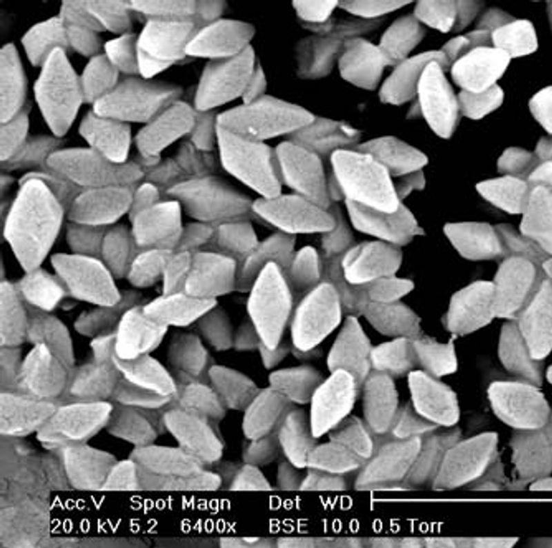 Bacillus Thuringiensis Pictures