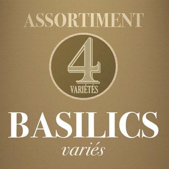 ASSORTIMENT DE BASILICS