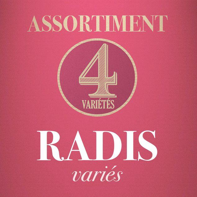 ASSORTIMENT DE RADIS D´HIVER