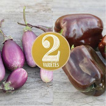 AUBERGINE ET POIVRON EN MELANGE (Aubergine pusa purple cluster et Poivron mini chocolate bell) NT