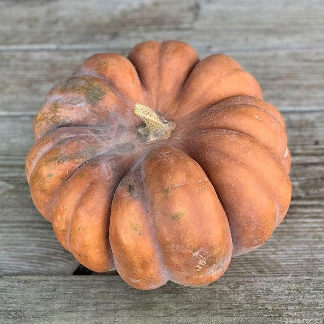 COURGE MUSQUEE MUSCADE AB